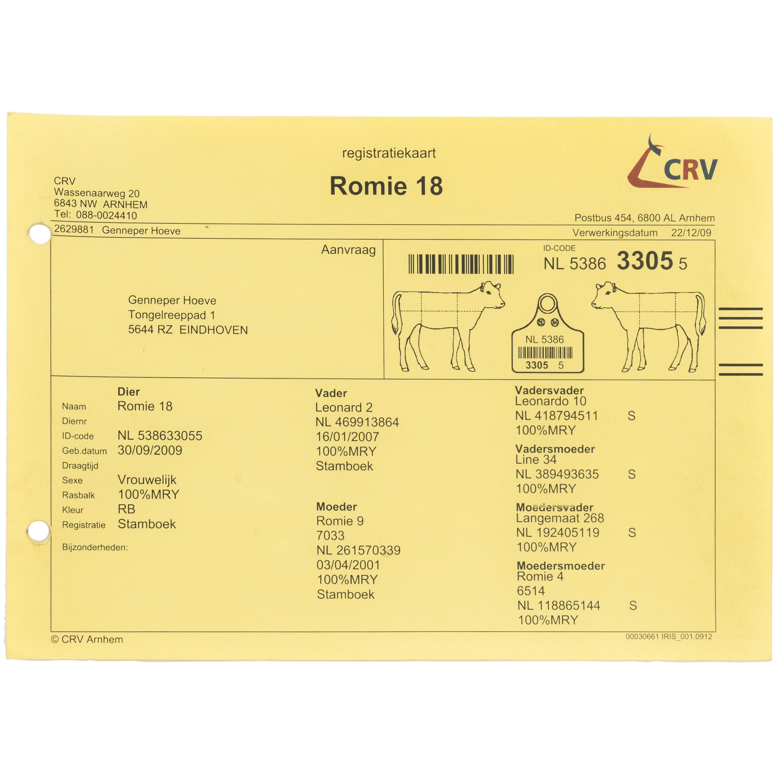 - Identity CardID Card of Romie 18.