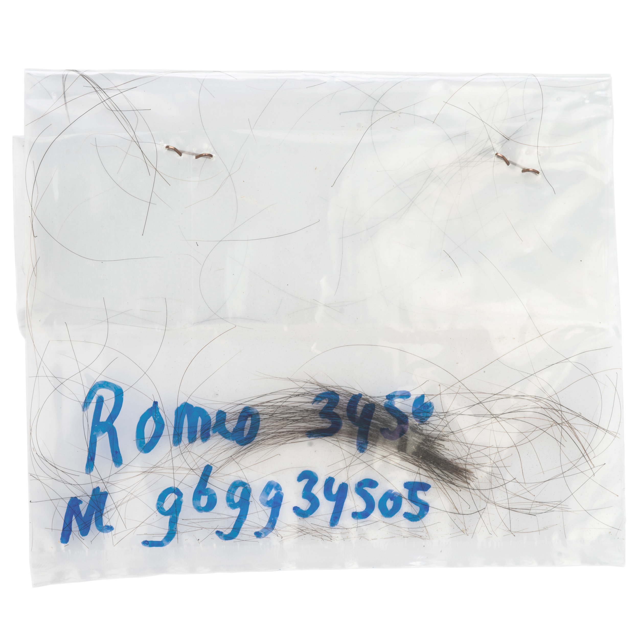 - Romeo 3450's hairCow hair and root. Extracted by pulling from around the ear area. Hair is used for DNA tests in order to trace the paternity of newborn calves.