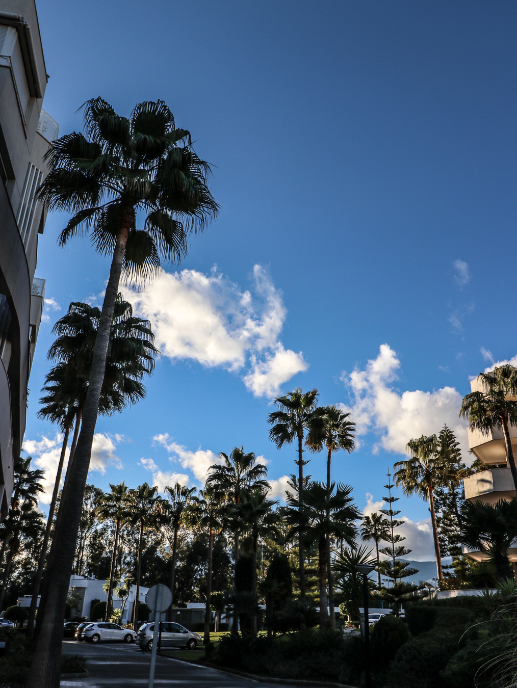 Never bored of palm trees <3