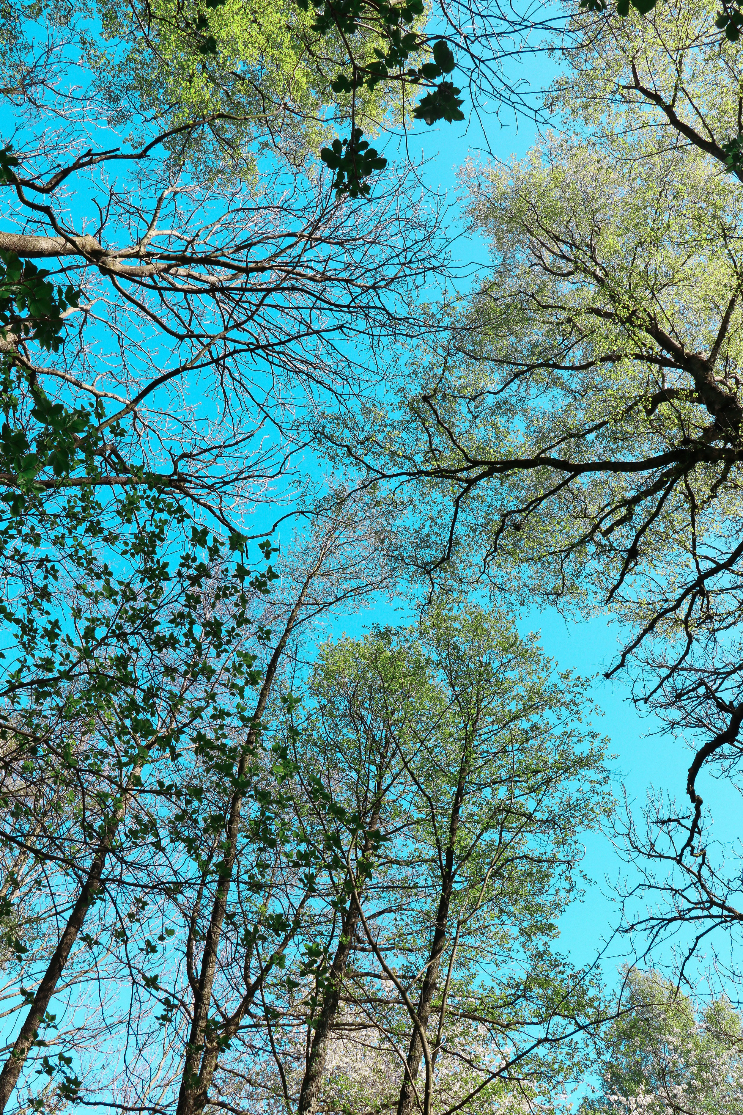Blue sky and forest in Sweden by Linda Haggh.jpg