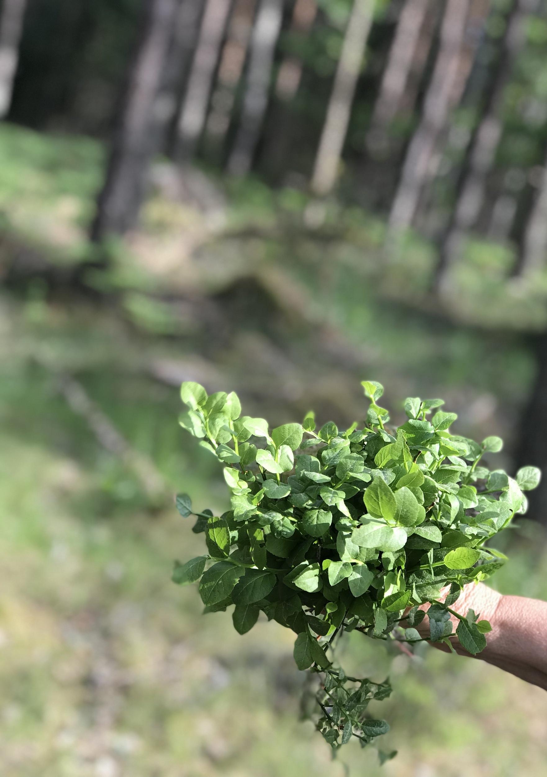 Plockar blåbärsblad med mamma <3