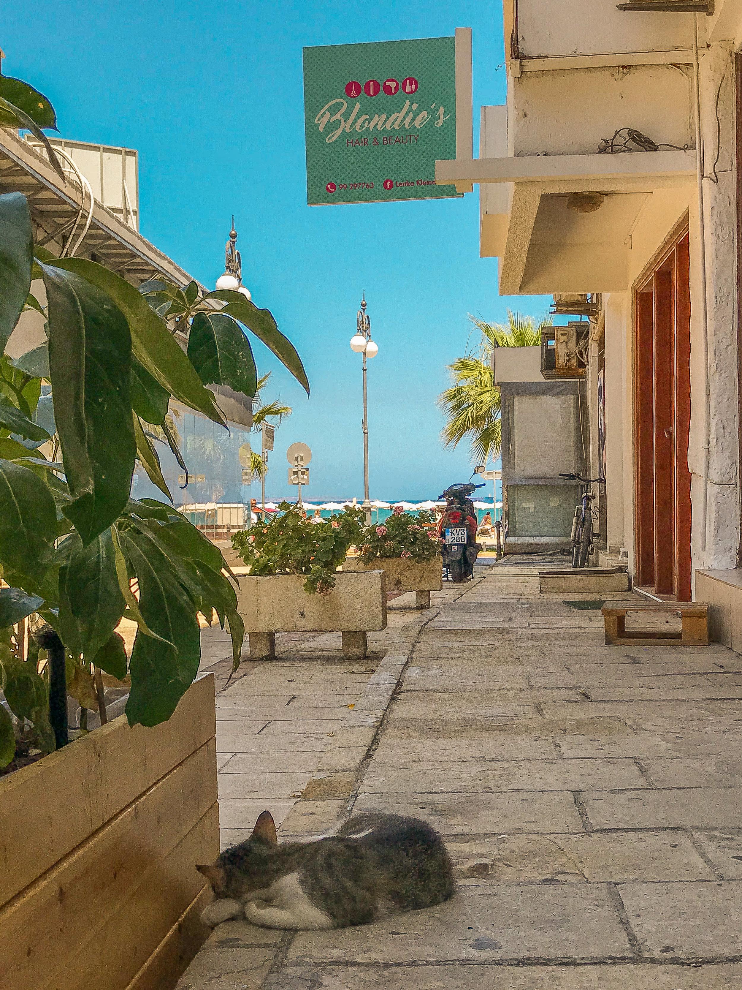 Siesta Larnaca Cyprus www.lindahaggh.com.jpg