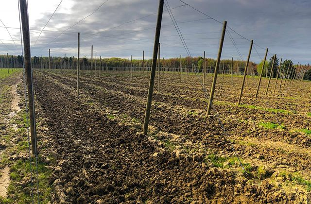 Got the drive rows cultivated this morning the hopyard's looking pretty ! 👌🏻 . . . #dirtporn #agriculture #entrepreneurship #beer #hopfarm #farming #ohiobeer #craftbeer #cultivator