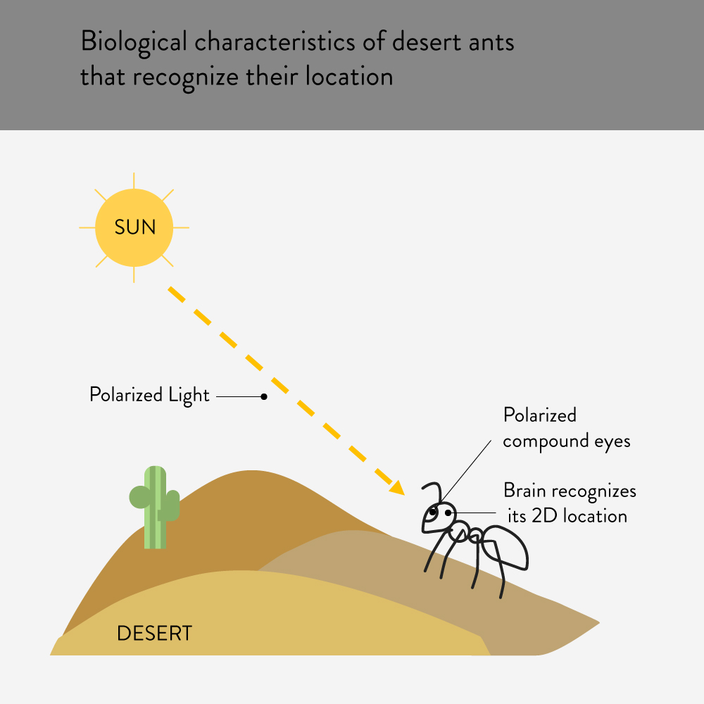 Desert Ant recognizes 2D location and find their home.