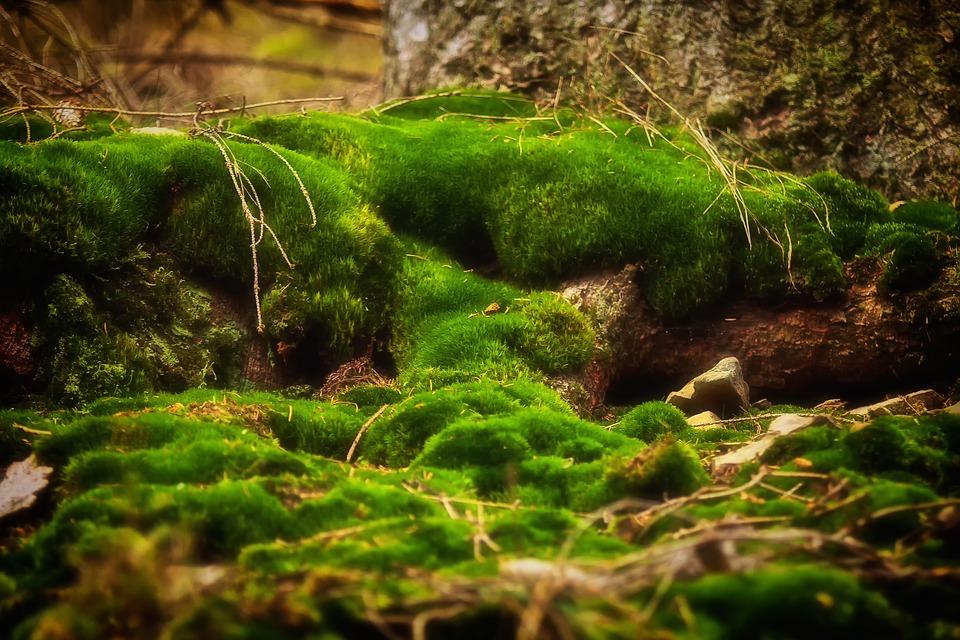 moss-706391_960_720.jpg