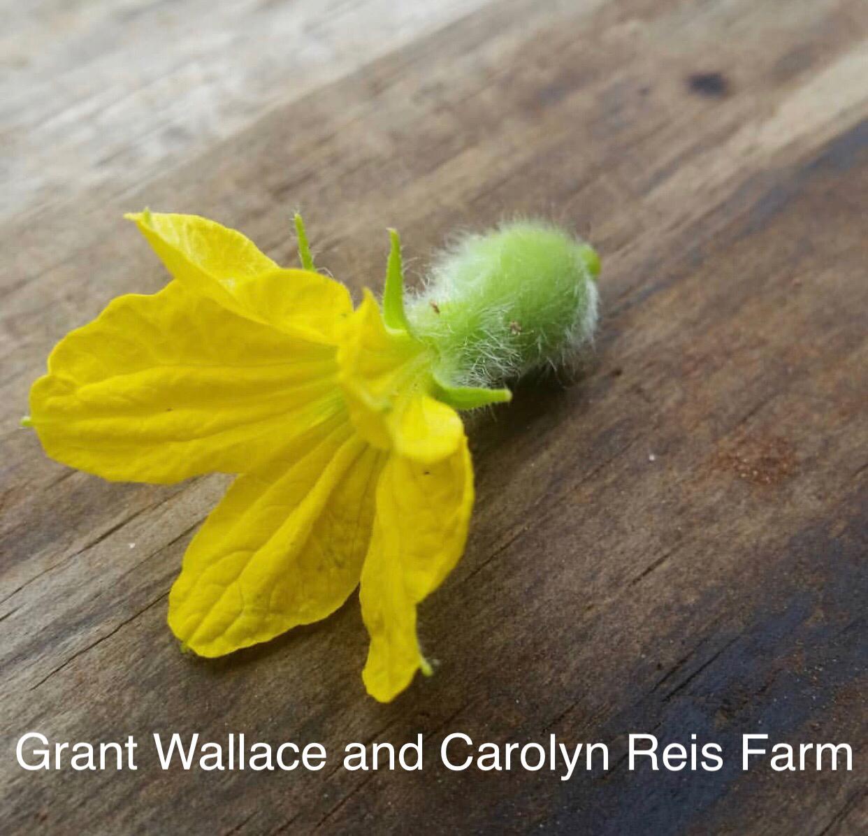 Grant Wallace and Carolyn Reis Farm