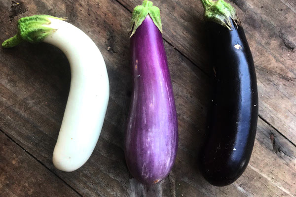 Fairytale Eggplants