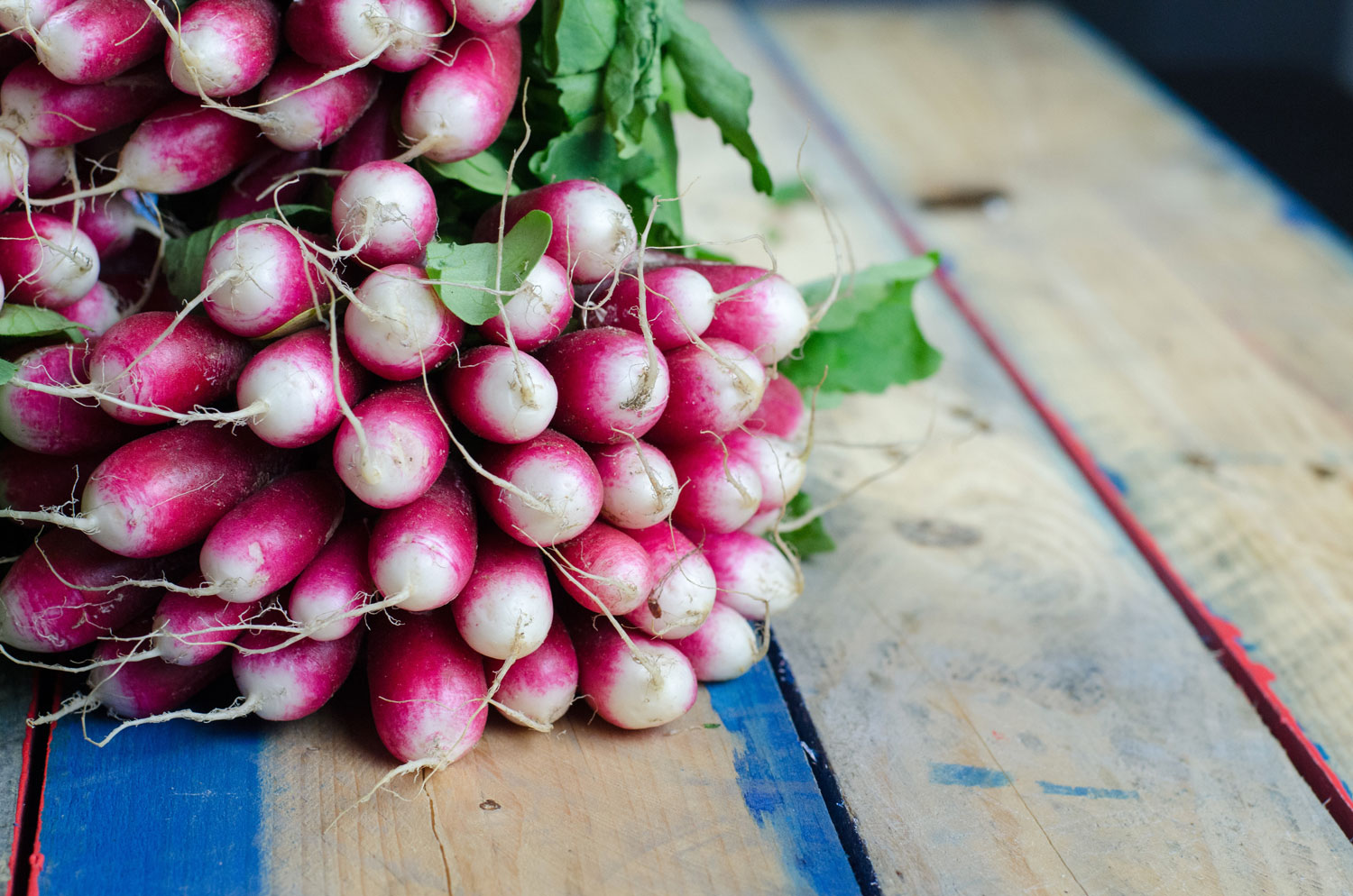 Fresh local radishes for restaurant supply.