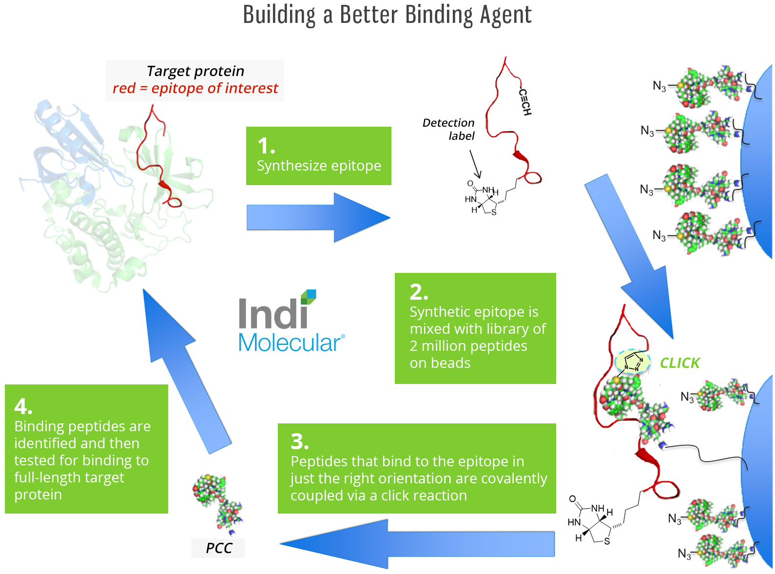 Building a Better Binding Agent.jpg