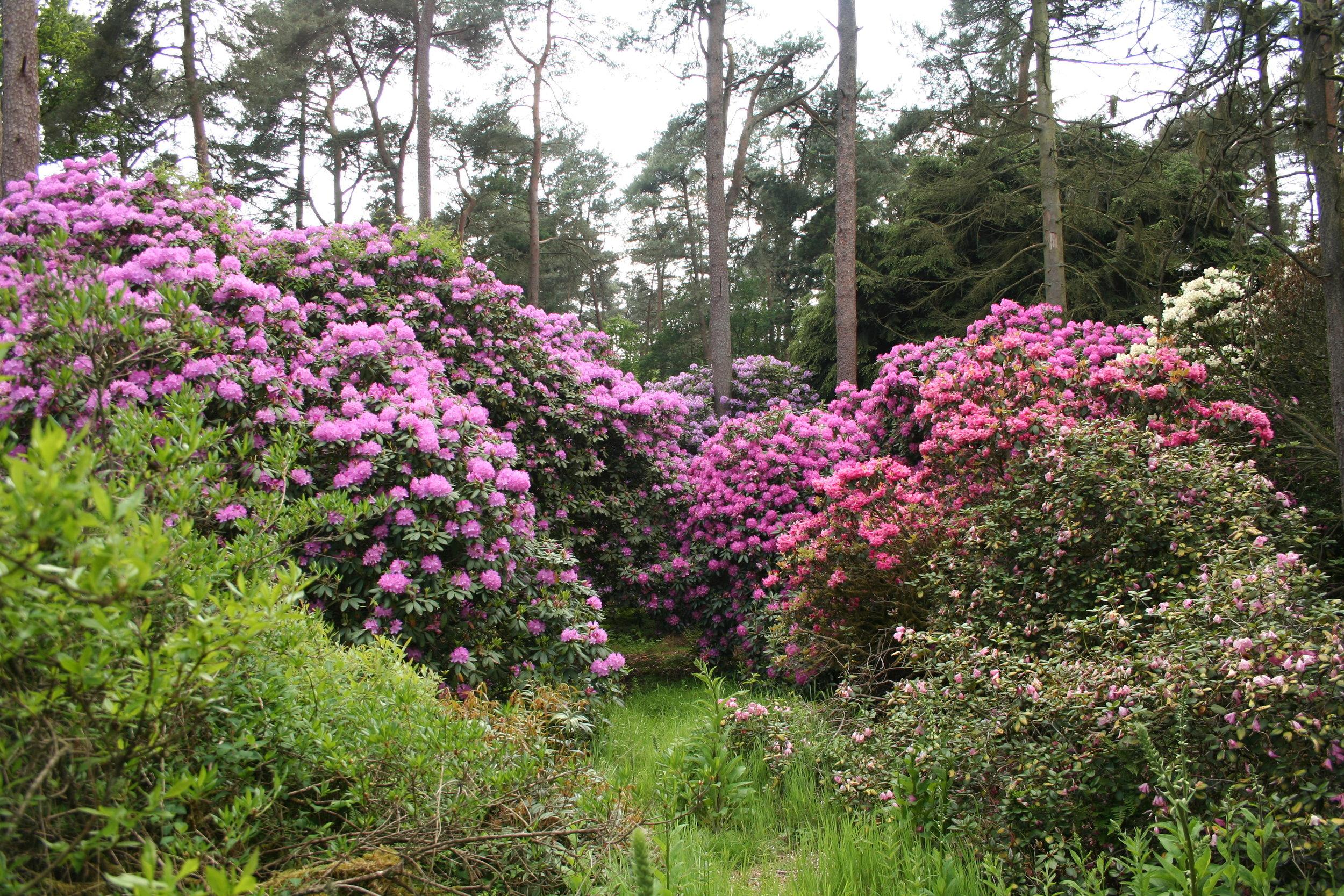 Rhododendron-Park Hobbie