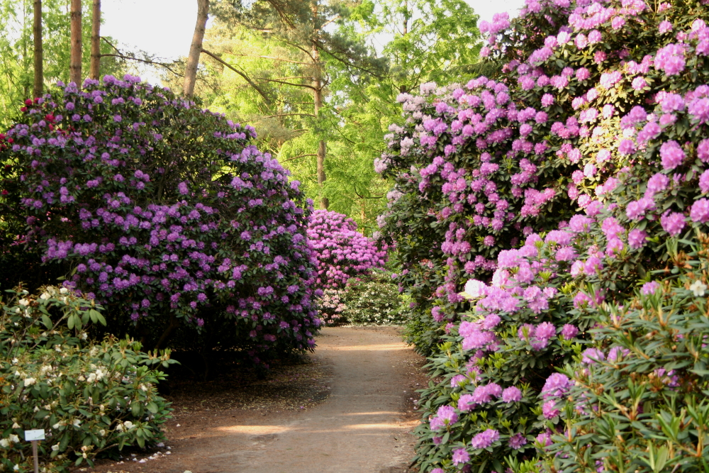 Rhododendronpark Gristede