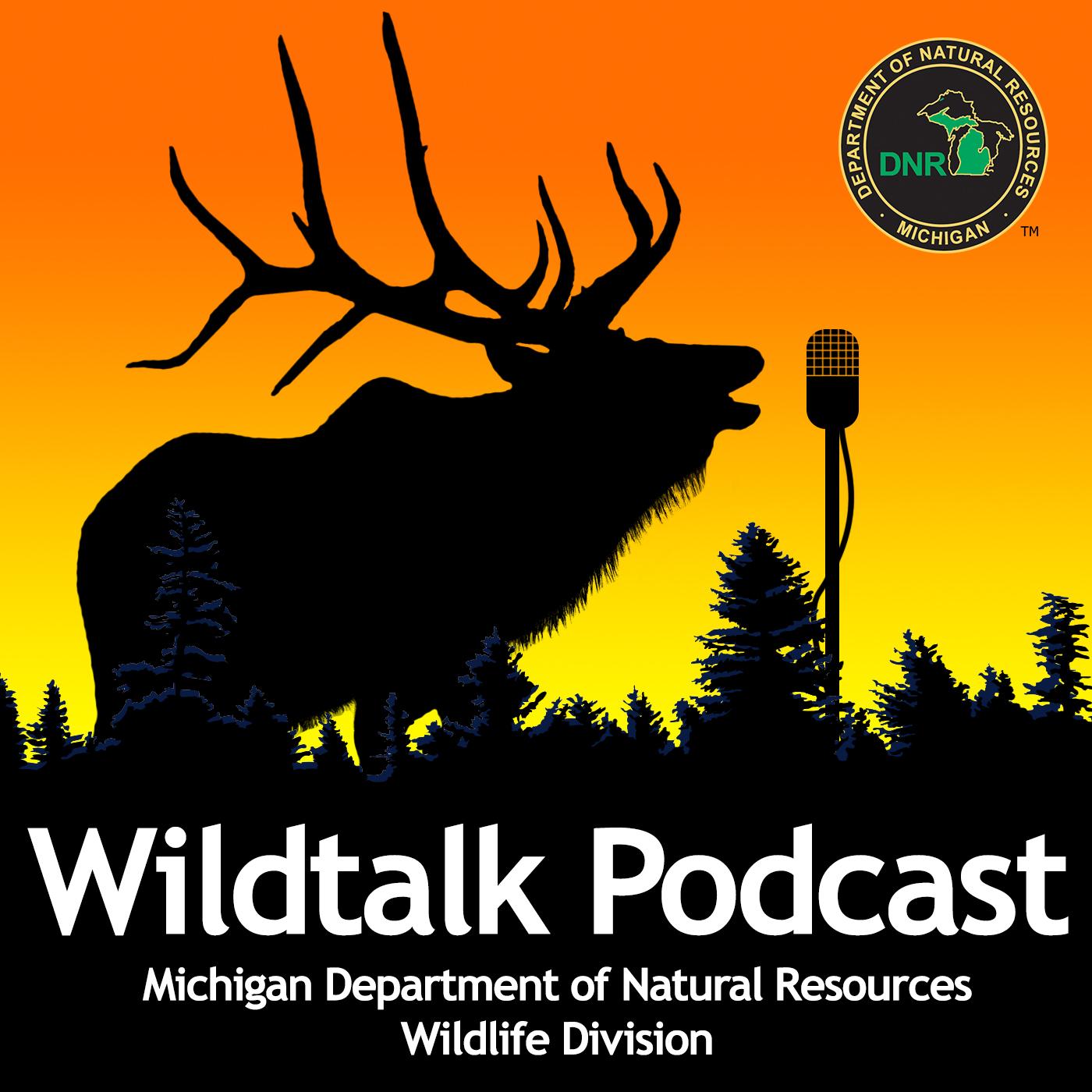 wildtalk_logo_624267_7.jpg