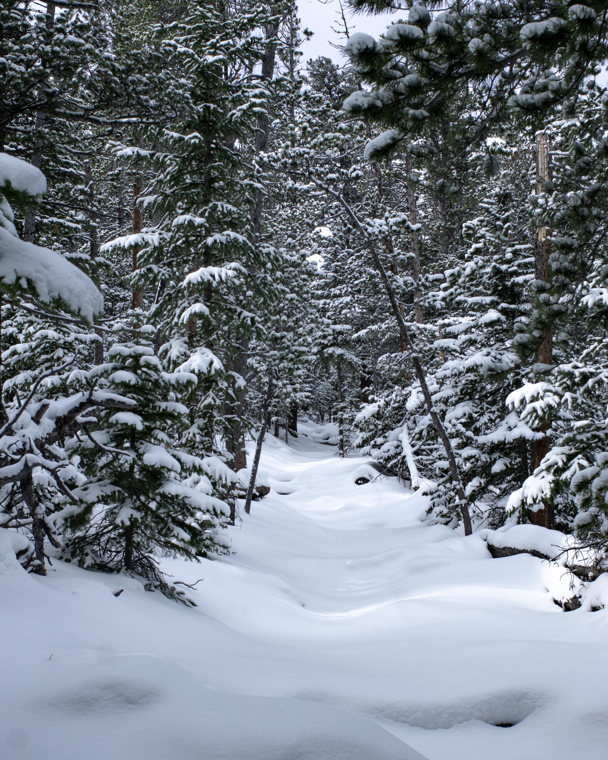 2018-Wild Basin Snowshoe-01322.jpg