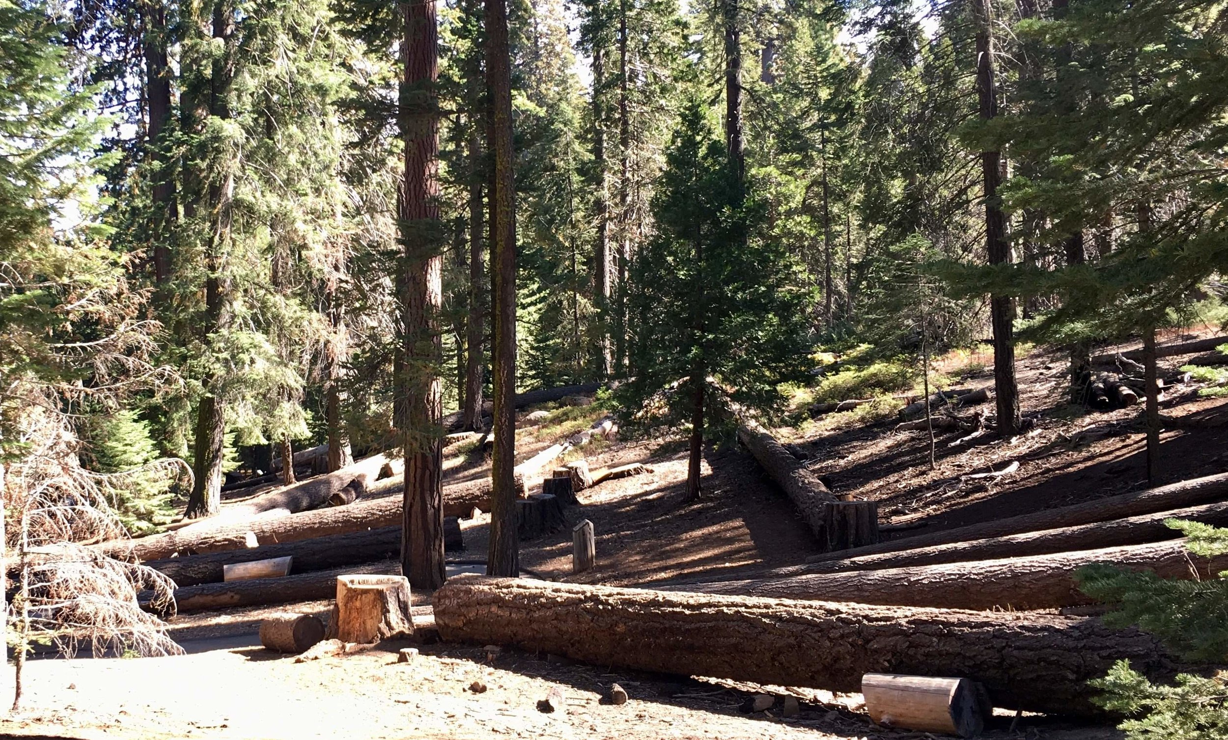 The cycle of life requires periodic forest fires for new Sequoia seeds to germinate