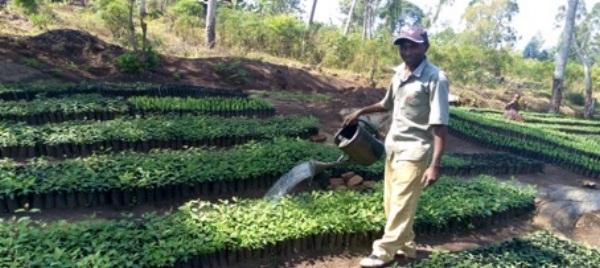 Thombias Kamaana waters seedlings in his tree nursery in the Kagera region of Tanzania.