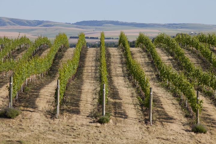 Winery & Vineyard Properties