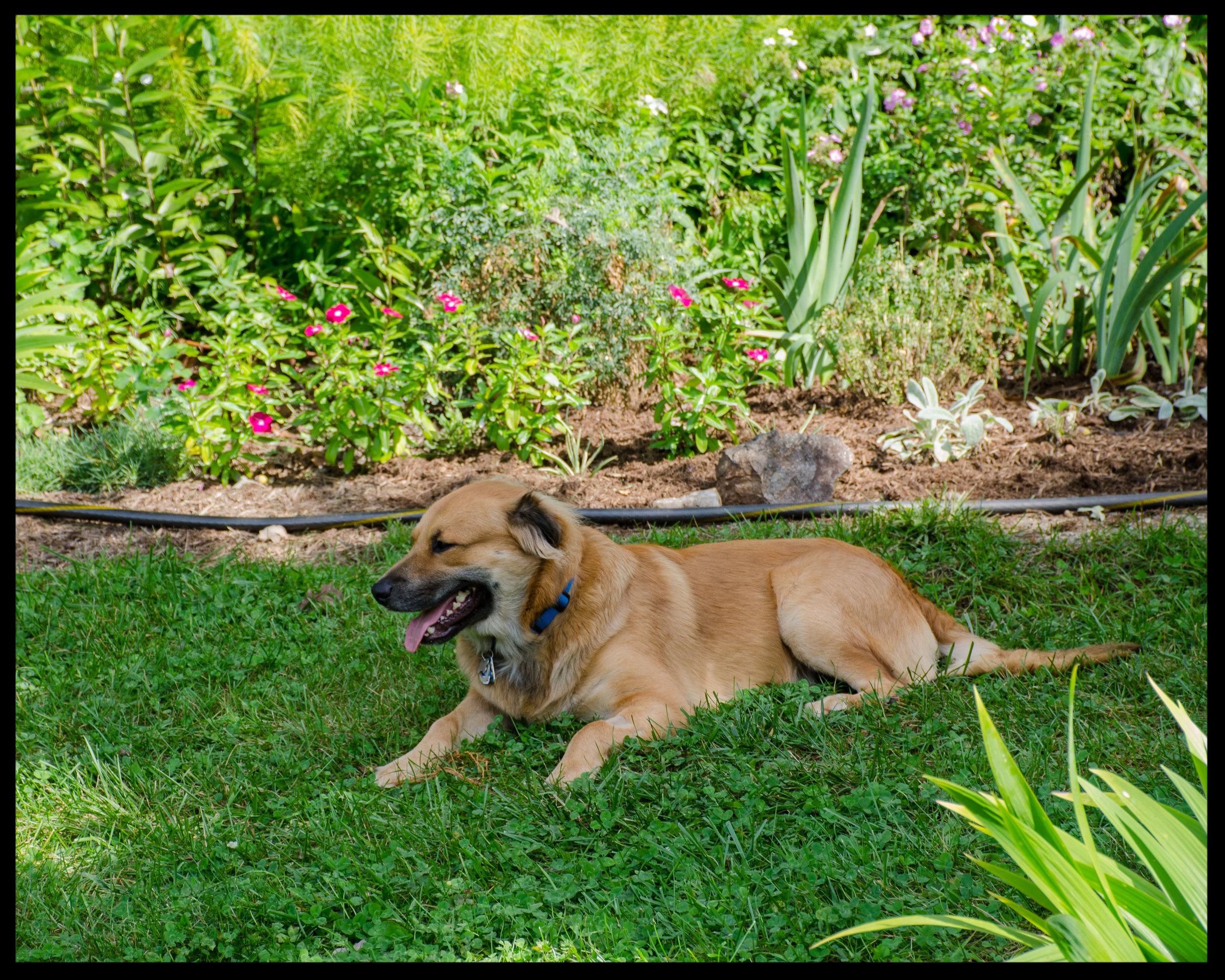 Odin. He's the pupper.