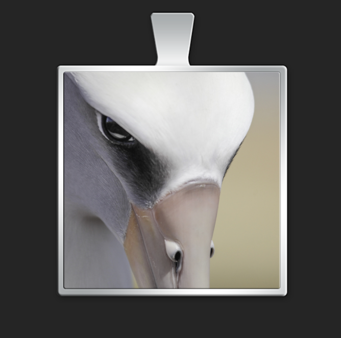 albatross-glamour-shot-square-color-pendant.png
