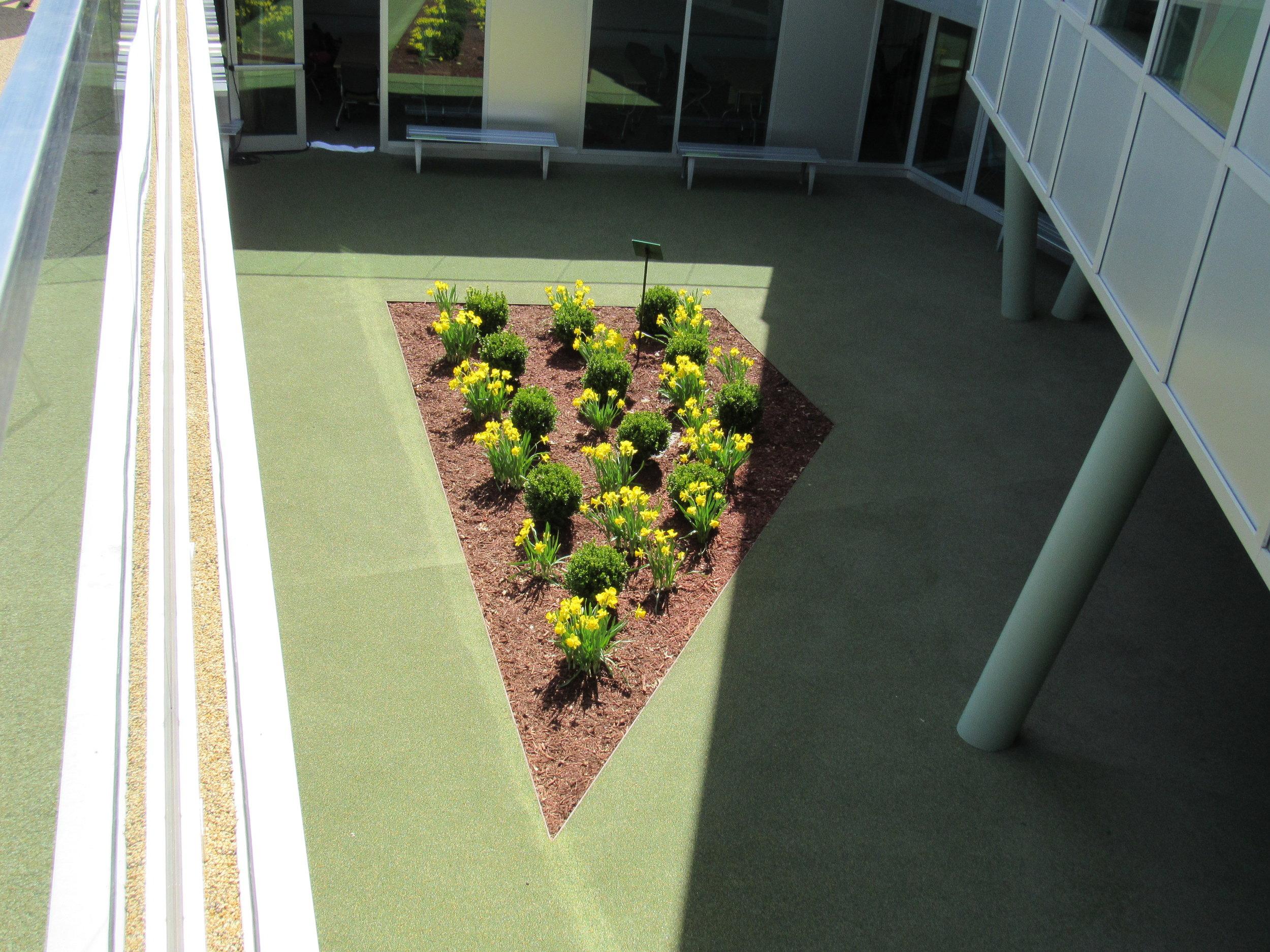 Garden Overhead.JPG