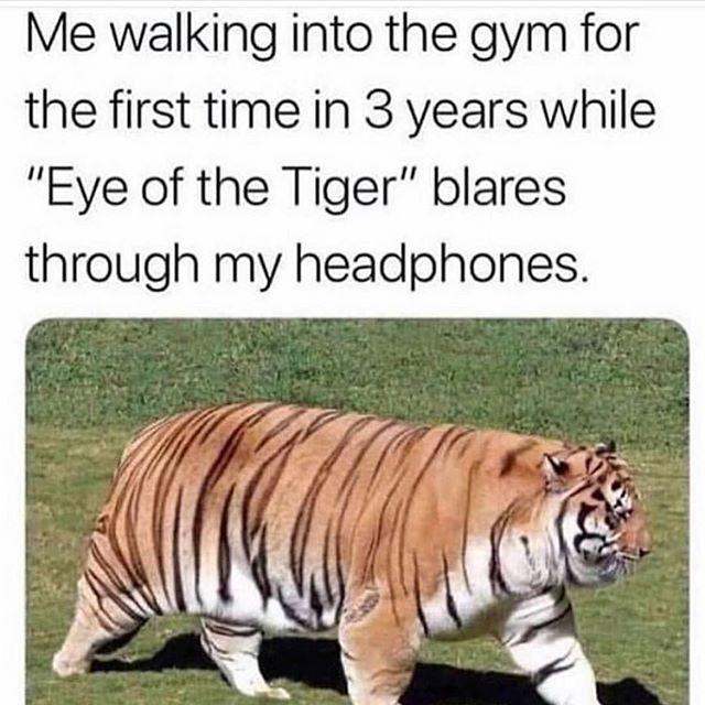 Might as walk looking good wearing some new gym swag! @eliteempireapparel #eliteempire #jointheempire #eyeofthetiger