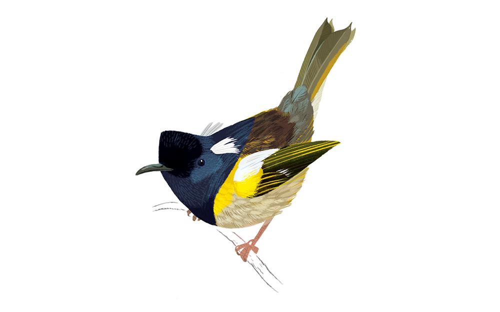 watermark-creative-daron-parton-perched-wine-stitch-bird-artwork.jpg