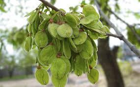 Ch 67 - Yuqian Fruit.jpeg