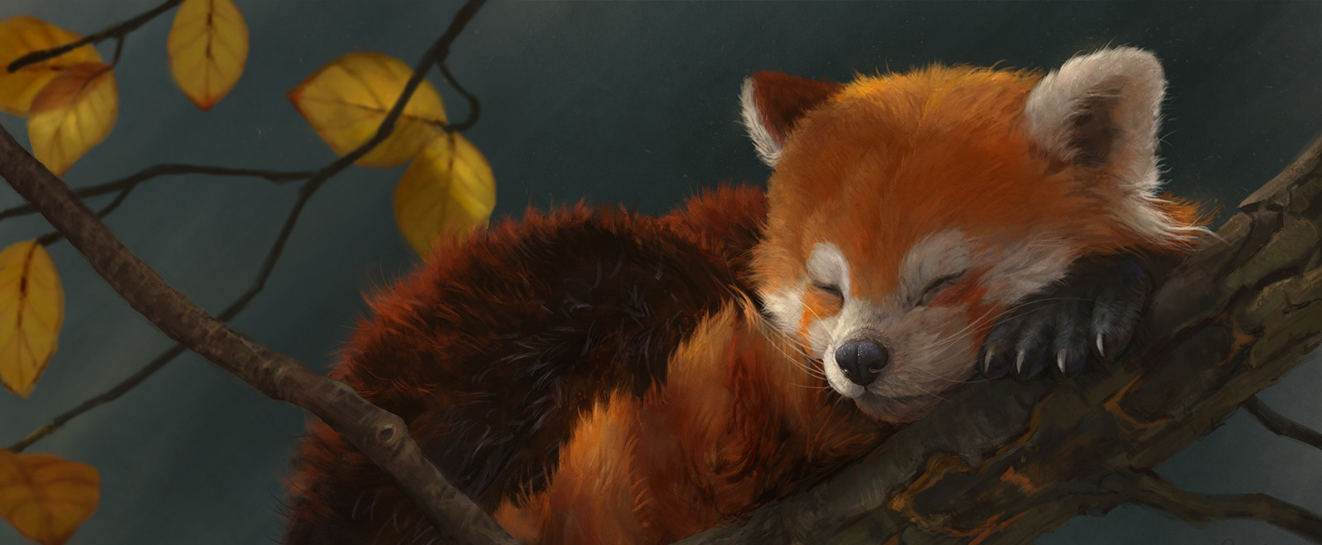 red panda background.jpg