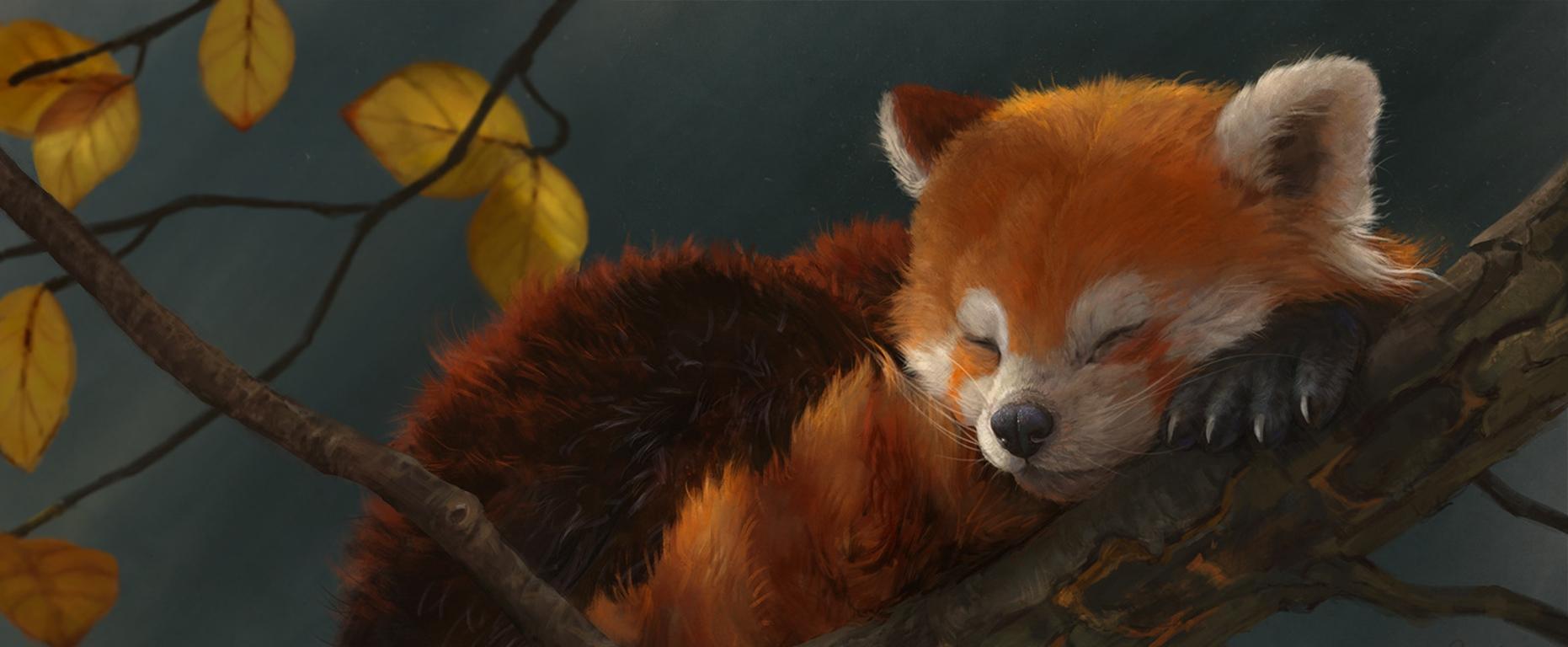 red panda background.jpg