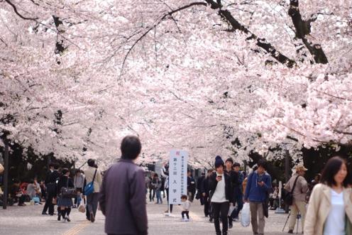 Spring di Tokodai