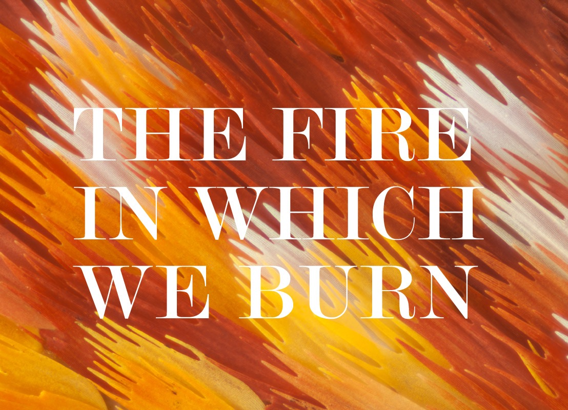 The Fire In Which We Burn image.jpg
