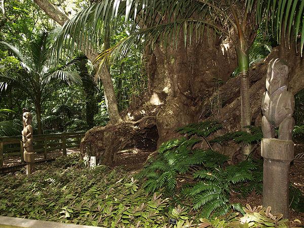 hukutaia-domain-Opotiki_Burial_Tree.jpg