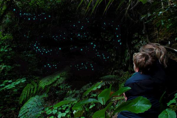 glow worms ohiwa.jpg