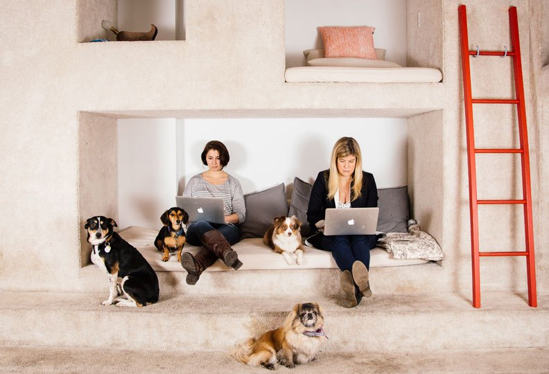 Bark & Co employees, of the human  and canine variety. Credit:  BARK