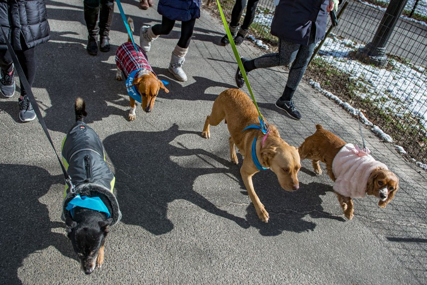 Foster pack walk, Photo by Nina Chiofalo