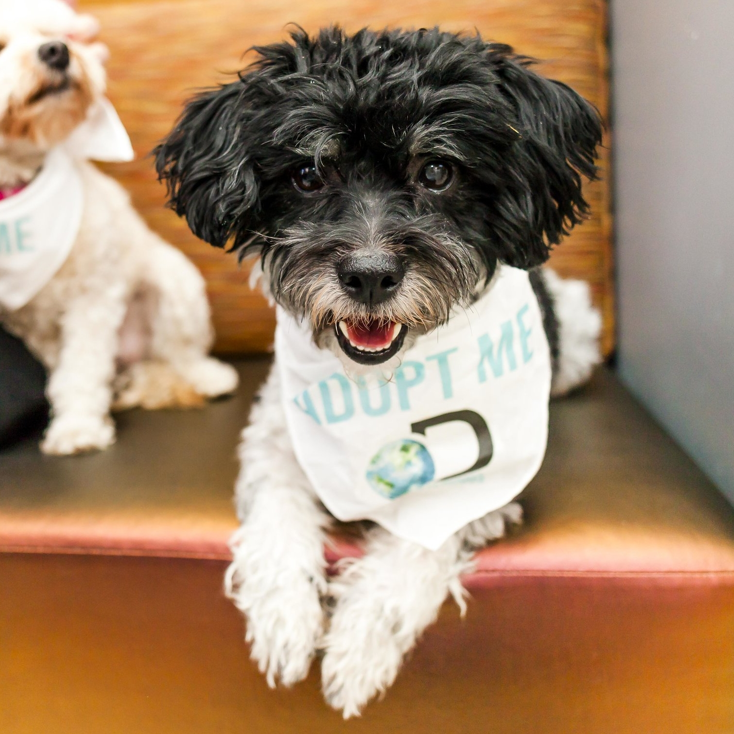 Cookie - Twenty Paws Rescue