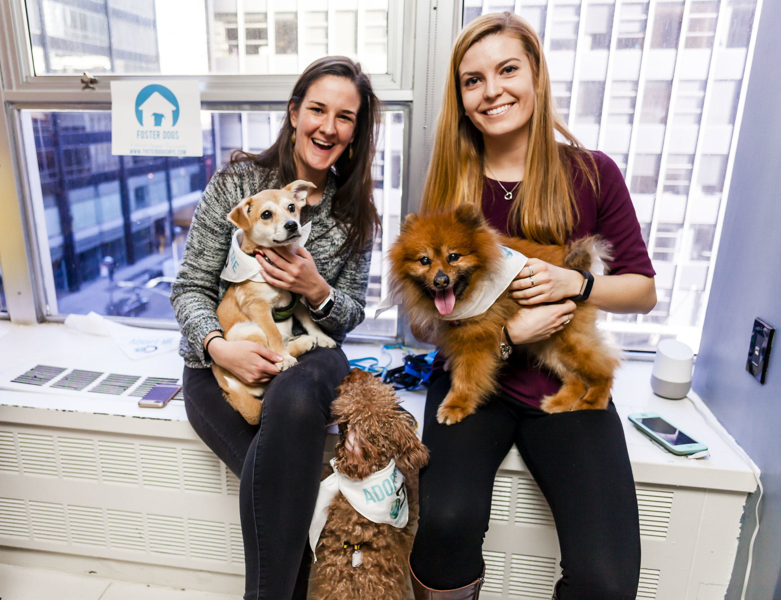 FosterDogs_DiscoveryPuppyParty_20180326_4878_©StaceyAxelrod.jpg