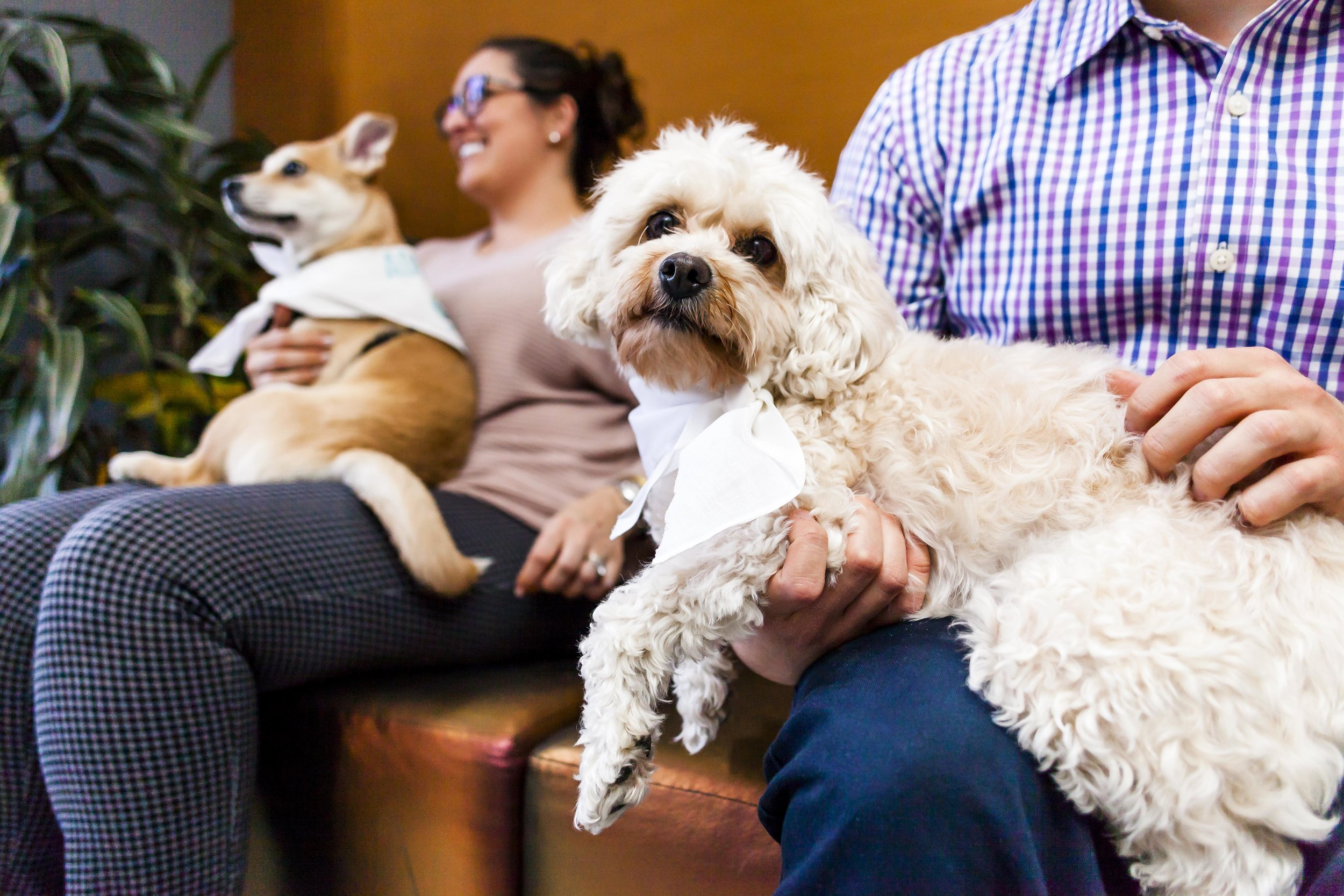 FosterDogs_DiscoveryPuppyParty_20180326_4871_©StaceyAxelrod.jpg