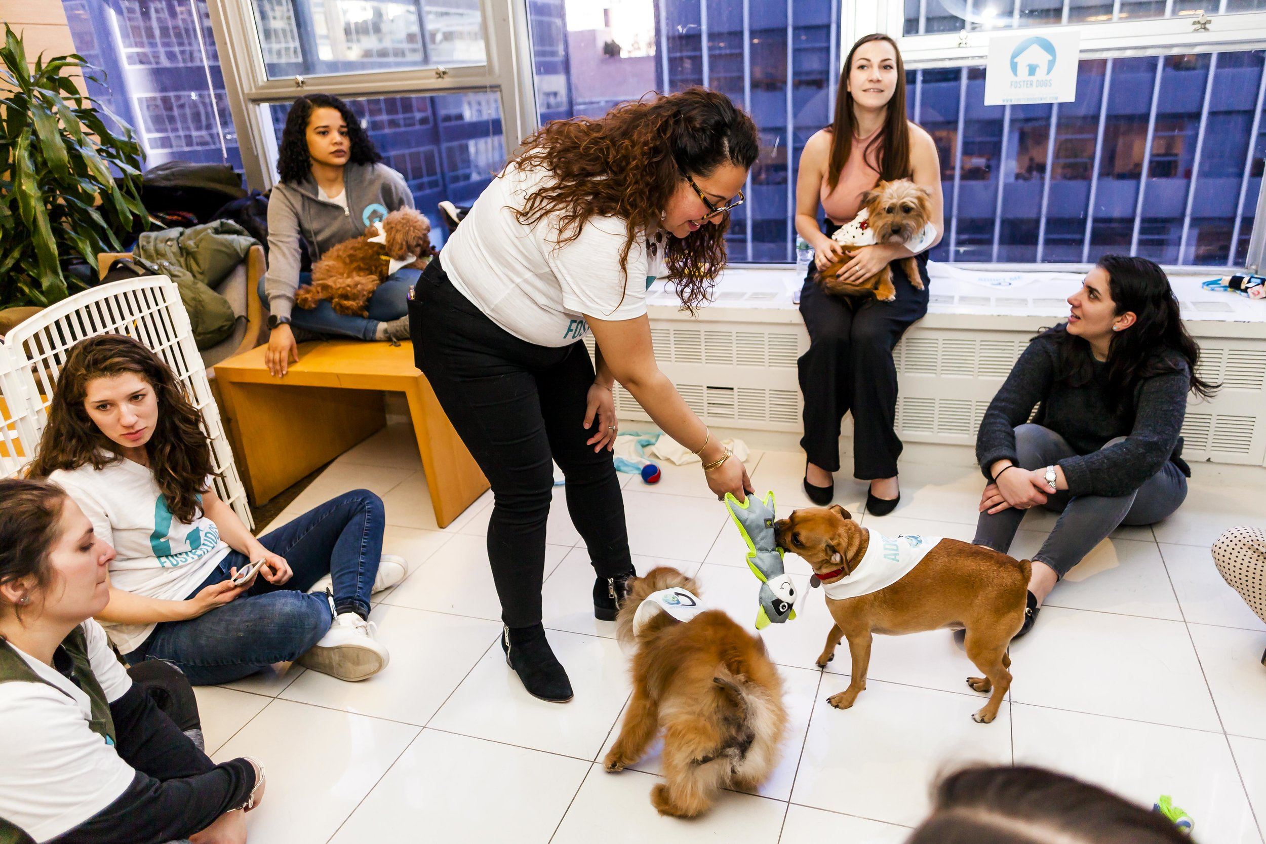 FosterDogs_DiscoveryPuppyParty_20180326_4969_©StaceyAxelrod.jpg