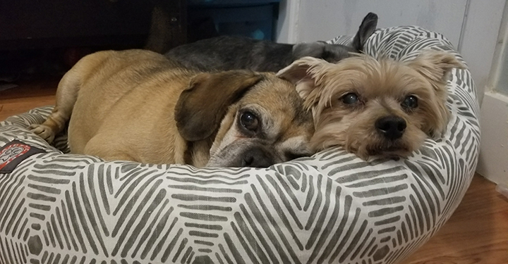 Muggle and foster brother Royce snuggling
