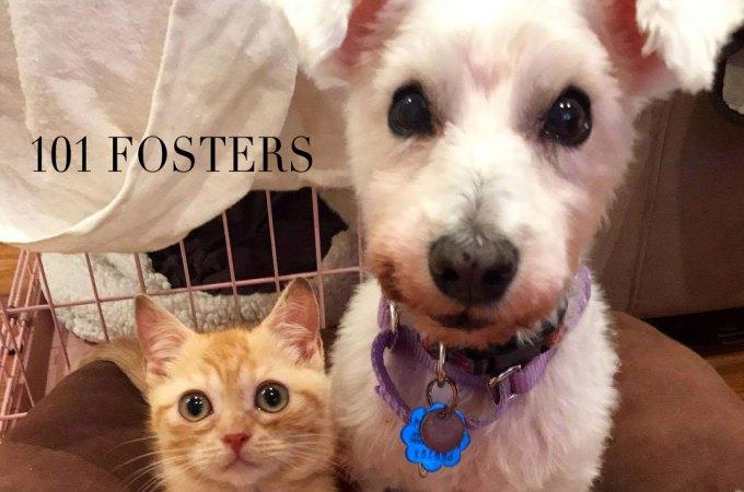 2-101-fosters.jpg