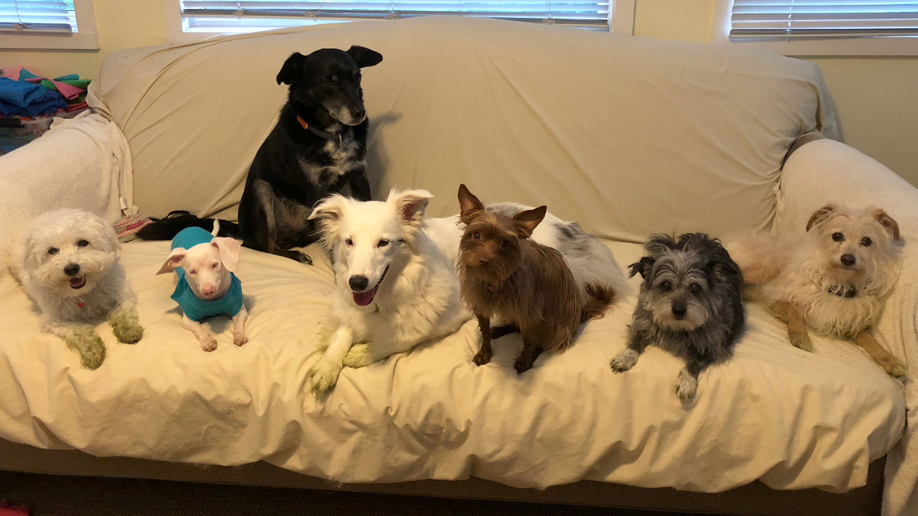 Piglet and his 6-pack of rescue buddies