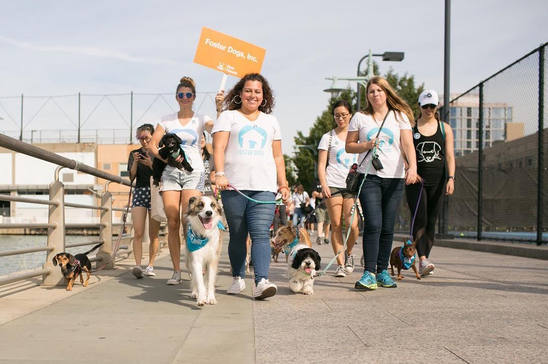 real_happy_dogs_foster_Strut.jpg