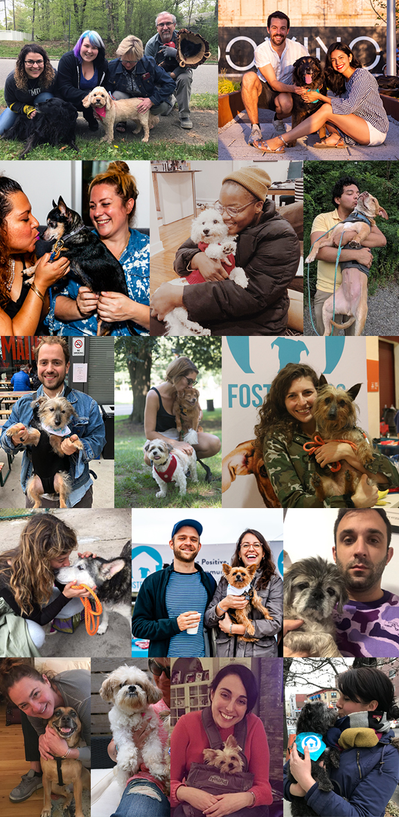 Thank you for making a huge difference this year, especially for these fifteen dogs who found happiness after leaving the shelter.
