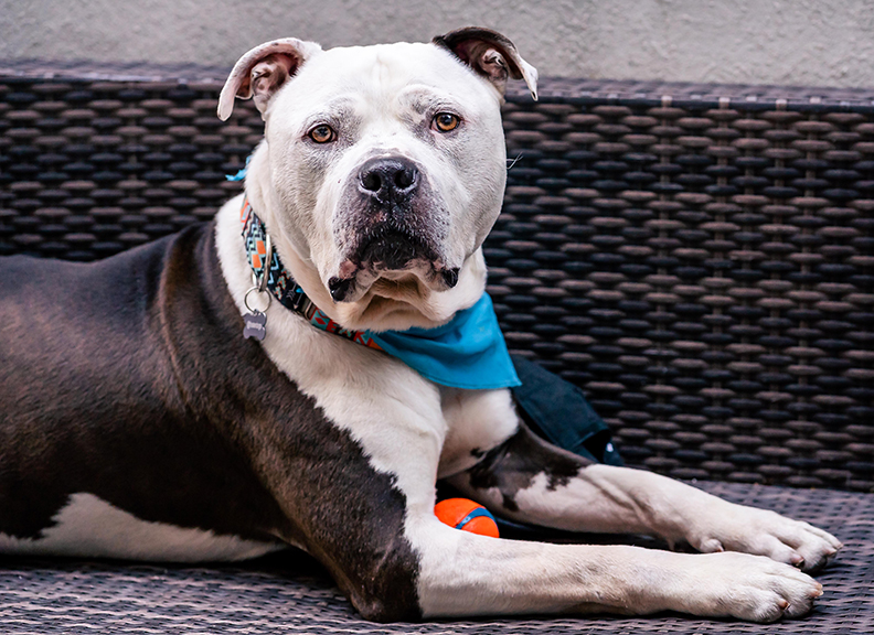 03102_Baloo-FosterDogs_20190406_©NYCPetPhotographer.jpg