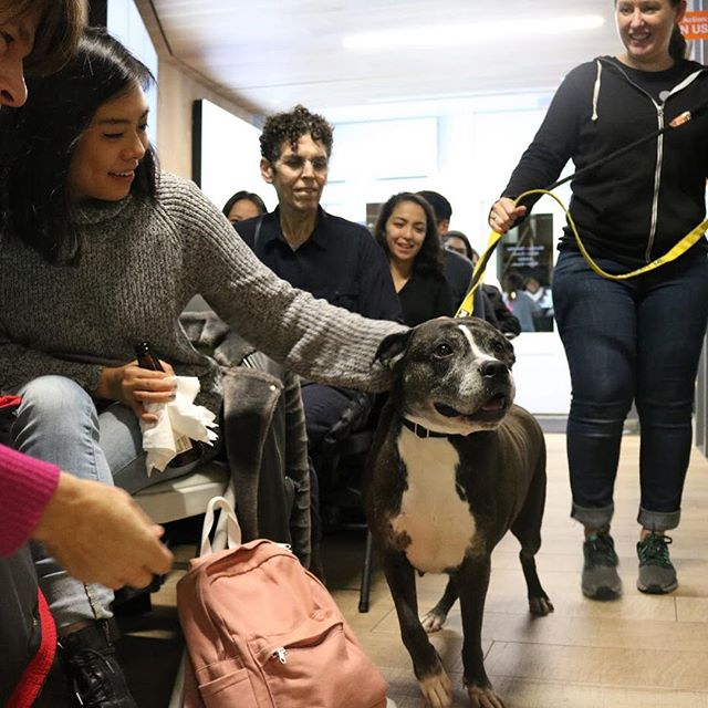 One of the BIGGEST benefits of fostering a big dog is that they have a whole lot more love to give. ❤️❤️❤️ Come stop by for our next #fostereducationseries workshop about fostering big dogs, next WEDNESDAY May 8th at @animalhaven. No foster experience necessary and it's free! ➡️ RSVP here: http://fosterbigdogs.splashthat.com • #bigdogsofinstagram #bigdogsrule #nyc #events #fosteringsaveslives #foster101 #fosterdogs #soho #fosterdogsnyc