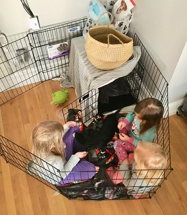 RHD Rinnah foster dogs.jpg