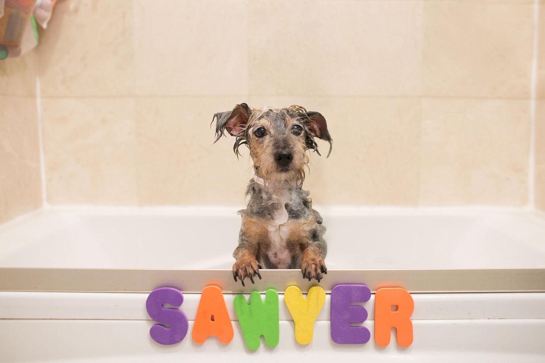 sawyer foster dogs RHD.jpg