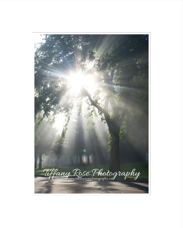 Tiffany Rose Photography