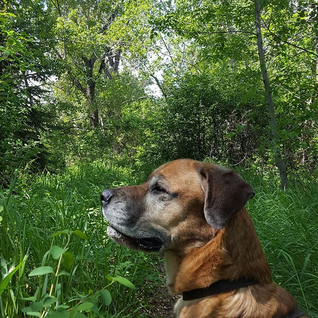 @calgaryparks you do an excellent job! I'd tell y'all where this hidden gem is, but then it wouldn't be hidden, now would it?  Hint: #Inglewoodyyc ;) #urbanparks #inInglewood #yycliving #hiddengem #gooutdoors #dogsofinstagram #doglife #walkies