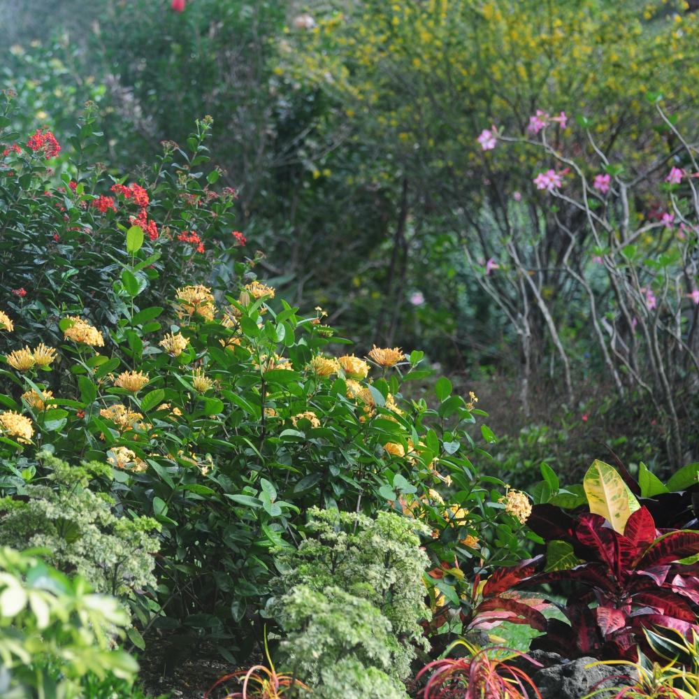 Ole Dam Mikkelsen's garden 12 Arthur Road Landscapes.jpg